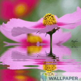 Flower over Water Live Wallpaper - a cool phone background.