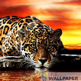 Leopard Wallpaper - a cool phone background.