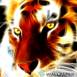 Tiger Wallpaper - a cool phone background.