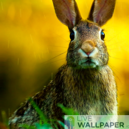 Easter Bunny Wallpaper - a cool phone background.