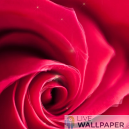 Artistic Rose Live Wallpaper - a cool phone background.