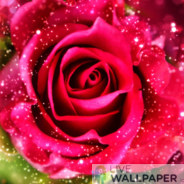 Rose Glitter Background - a cool phone background.