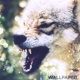 Angry Wolf Wallpaper - a cool phone background.