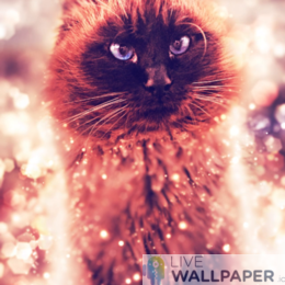 Cat Gold Glitter Background - a cool phone background.