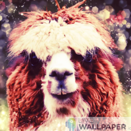 Cute Alpaca Live Wallpaper - a cool phone background.