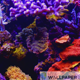 Aquarium Live Wallpaper - a cool phone background.