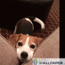 Cute Dog GIF Live Wallpaper Pack - a cool phone background.