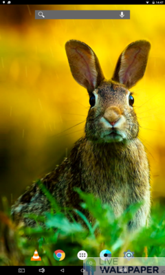 Easter Bunny Wallpaper - a cool phone wallpaper for Android - Screenshot #1