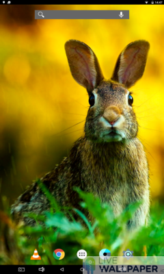 Easter Bunny Wallpaper - a cool phone wallpaper for Android - Screenshot #3