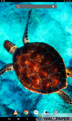 Sea Turtle Wallpaper - a cool phone wallpaper for Android - Screenshot #2