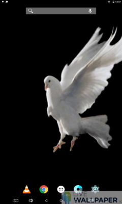 White Pigeon Wallpaper - a cool phone wallpaper for Android - Screenshot #1