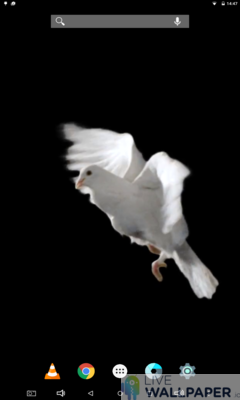 White Pigeon Wallpaper - a cool phone wallpaper for Android - Screenshot #3