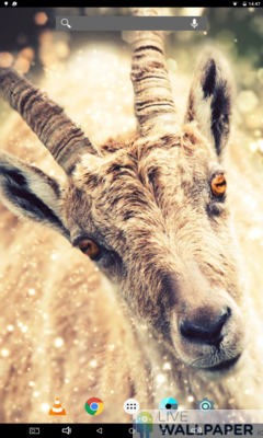 Funny Goat Wallpaper - a cool phone wallpaper for Android - Screenshot #1