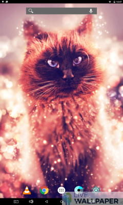 Cat Gold Glitter Background - a cool phone wallpaper for Android - Screenshot #1