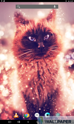 Cat Gold Glitter Background - a cool phone wallpaper for Android - Screenshot #2