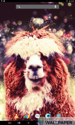 Cute Alpaca Live Wallpaper - a cool phone wallpaper for Android - Screenshot #1
